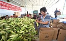 乡村振兴:农村扶贫需要更多的科技支持