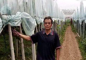 <b>安徽:门外汉变成葡萄种植行家 许合录带动贫困户共同致富发展</b>
