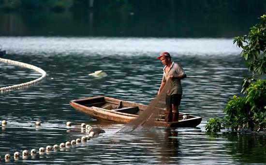 淡水鱼怎么养?淡水鱼的养殖方法