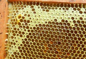 蜜蜂不造脾怎么办?蜜蜂不造脾的原因以及解决办法