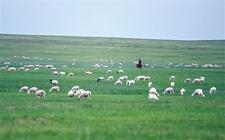"<b>内蒙古乡村振兴:培育""农字号""产业 推动农业的进一步发展</b>"