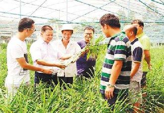 <b>重庆五间镇:科技人才刘奕清带领团队研发生姜 让农户增收致富</b>