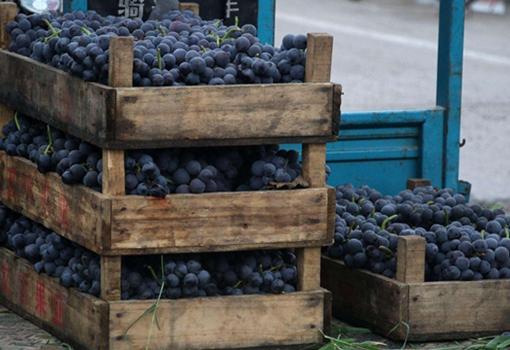 安徽铜陵:扶贫助学 爱心协会让滞销葡萄销售一空