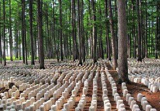 广西:紧抓林下经济示范项目建设