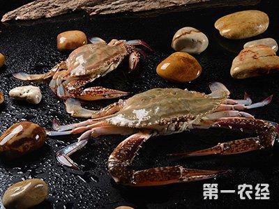 山东威海:水产品市场价格涨跌互现 虾类价格上升梭子蟹降价