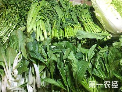 夏日持续高温致湖南省蔬菜价格小幅上涨