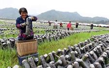 黑龙江:小小项目点燃扶贫新希望