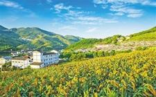 广西:出台乡村振兴补助资金管理办法