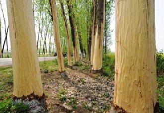 海南定安县:176株林木被剥去树皮案已结案