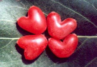 <b>今日七夕:代表我爱你的相思果怎么种</b>