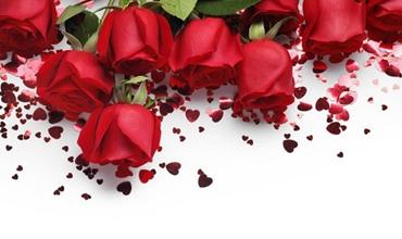 今日七夕:不可错过的玫瑰花的种植方法