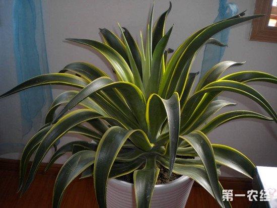 适合室内养殖的多肉植物有哪些?能净化空气的多肉植物介绍