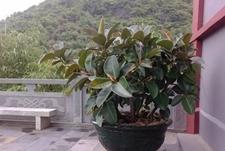 哪些绿植有去除甲醛的功能?新房装修除甲醛建议买这些盆栽