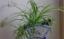 能净化室内空气又十分好养活的8种盆栽植物