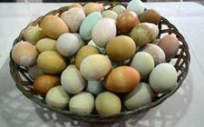 母鸡为啥会下不同颜色的鸡蛋?哪种颜色的鸡蛋更有营养?