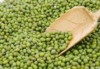 <b>几种绿豆常见的病虫害以及防治措施</b>