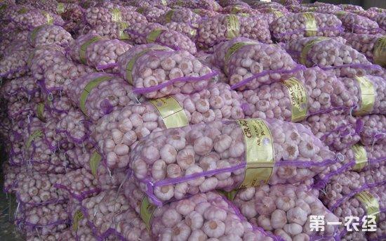 山东金乡大蒜价格持续上涨 成交量和成交额下降