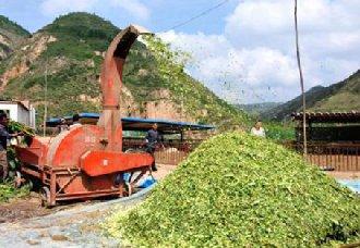 甘肃华池:大力发展草畜产业 让贫困农户增收