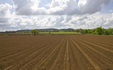 <b>张红宇:加强对耕地资源的保护,确保粮食在国民中的地位</b>
