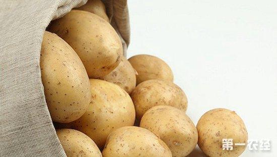 """""""优薯计划"""",马铃薯的育种和繁殖方式的颠覆性创新"""