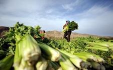 <b>以产业扶贫促进农村发展农民增收</b>
