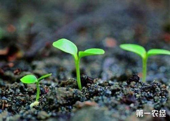 要怎么提高种子的催芽率?种子催芽的技术要点