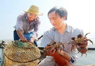 螃蟹怎么养?螃蟹混养方式