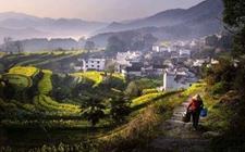 <b>互联网:提速农村现代化转型 推动乡村振兴进程</b>