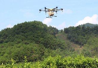 广西钟山县:近万亩柑橘利用无人机防控黄龙病的传播