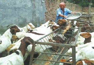 <b>曾是五保户的七旬老翁梁士举养羊脱贫 摘掉贫困帽</b>