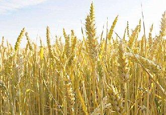 <b>农业秸秆剩余物制成环保型人造板,无甲醛降污染</b>