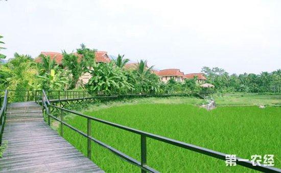 海南的美丽乡村