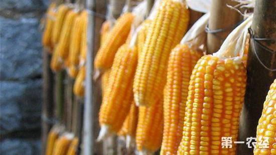 2018年9月玉米价格行情或将稳中有涨