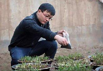 <b>大学生回乡种植绿色无公害韭菜 实现创收</b>