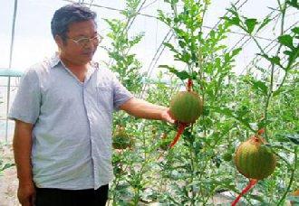 <b>陕西省首届十佳职业农民——马新世</b>