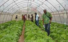 <b>加强农产品监管 其中小规模农户是关键</b>