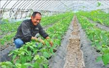 黑龙江:推进农业侧供给改革 助力乡村振兴发展