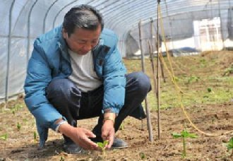 <b>西藏米林县:尼玛带动周边群众进行藏药种植 从而实现增收致富</b>