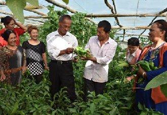 <b>新疆:菜农杨正民带领乡亲种植无公害蔬菜共同致富</b>