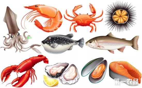 江苏凌家塘市场:各地新鱼增多 虾类供需两旺