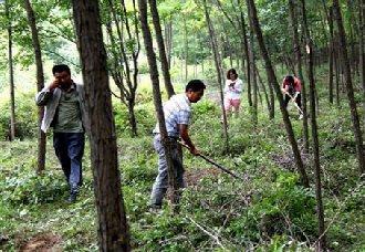 <b>辽宁三江口镇:杨勇27年从事林业工作 只为守住这抹绿色</b>