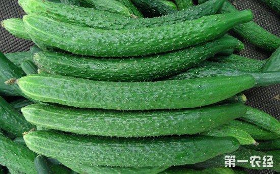 北京新发地市场蔬菜价格一周回落5.14%