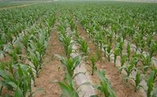 山西长治:推广新技术 大力发展旱作农业