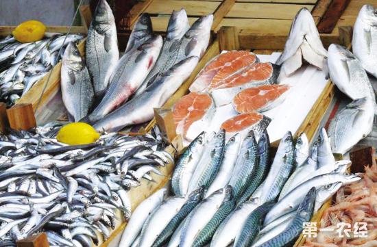 2018年黄海休渔期结束 威海水产品量大价低
