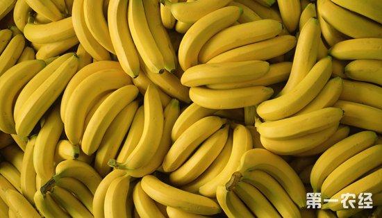 2018年9月7日进口香蕉和国产香蕉价格行情
