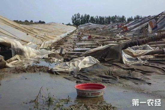 寿光受灾严重 农业部再次组织专家组赴一线减灾