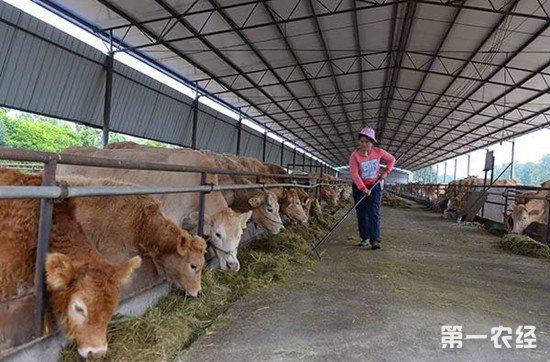 牛不吃食怎么办?检查这些原因再对症下药