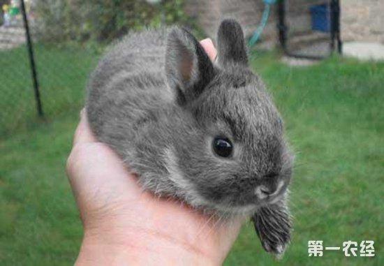 幼兔为什么会拉稀?应该怎么治疗?
