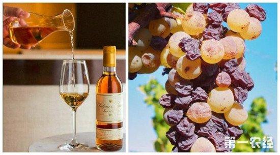 贵腐葡萄酒为什么这么贵?