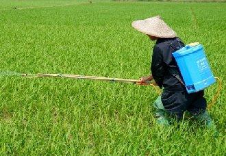 <b>沈阳:启动北方水稻肥药两减项目</b>